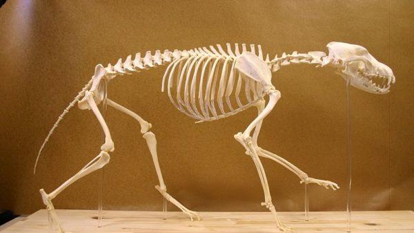 Best Zoology Blogs